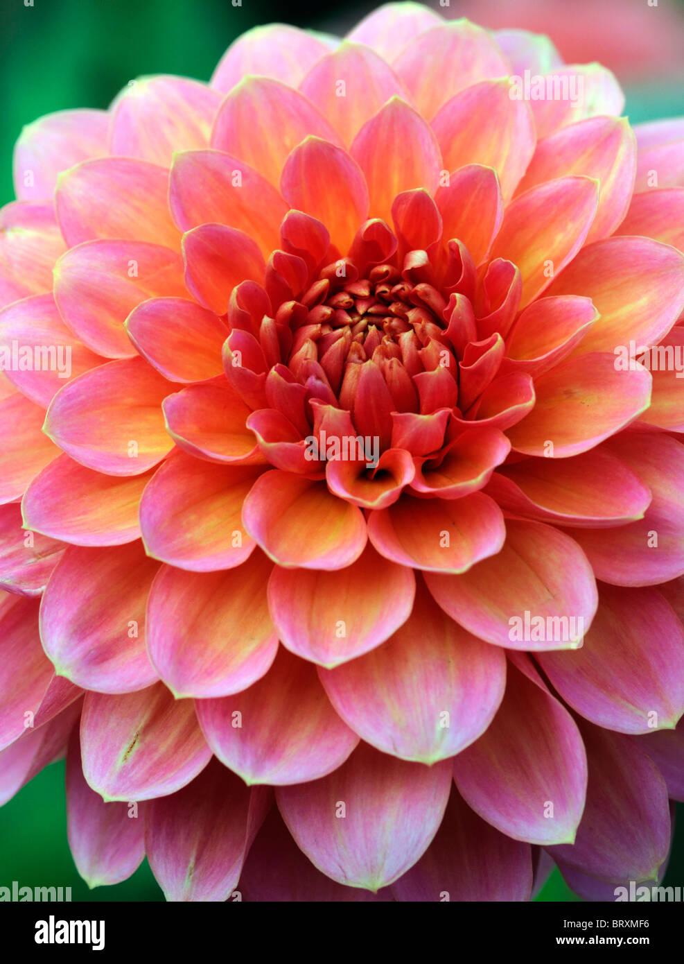 Altrosa Mischen farbe mischen rosa best farben mischen reinen acrylnagel kunst