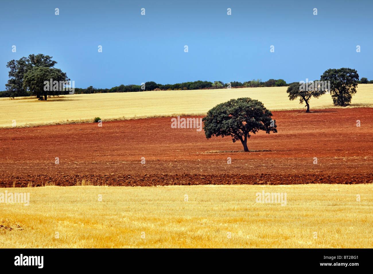 Encinas y Campos de Cultivo de Ciudad Real Castilla La Mancha España Eichen und Felder Ciudad Real Castilla Stockbild