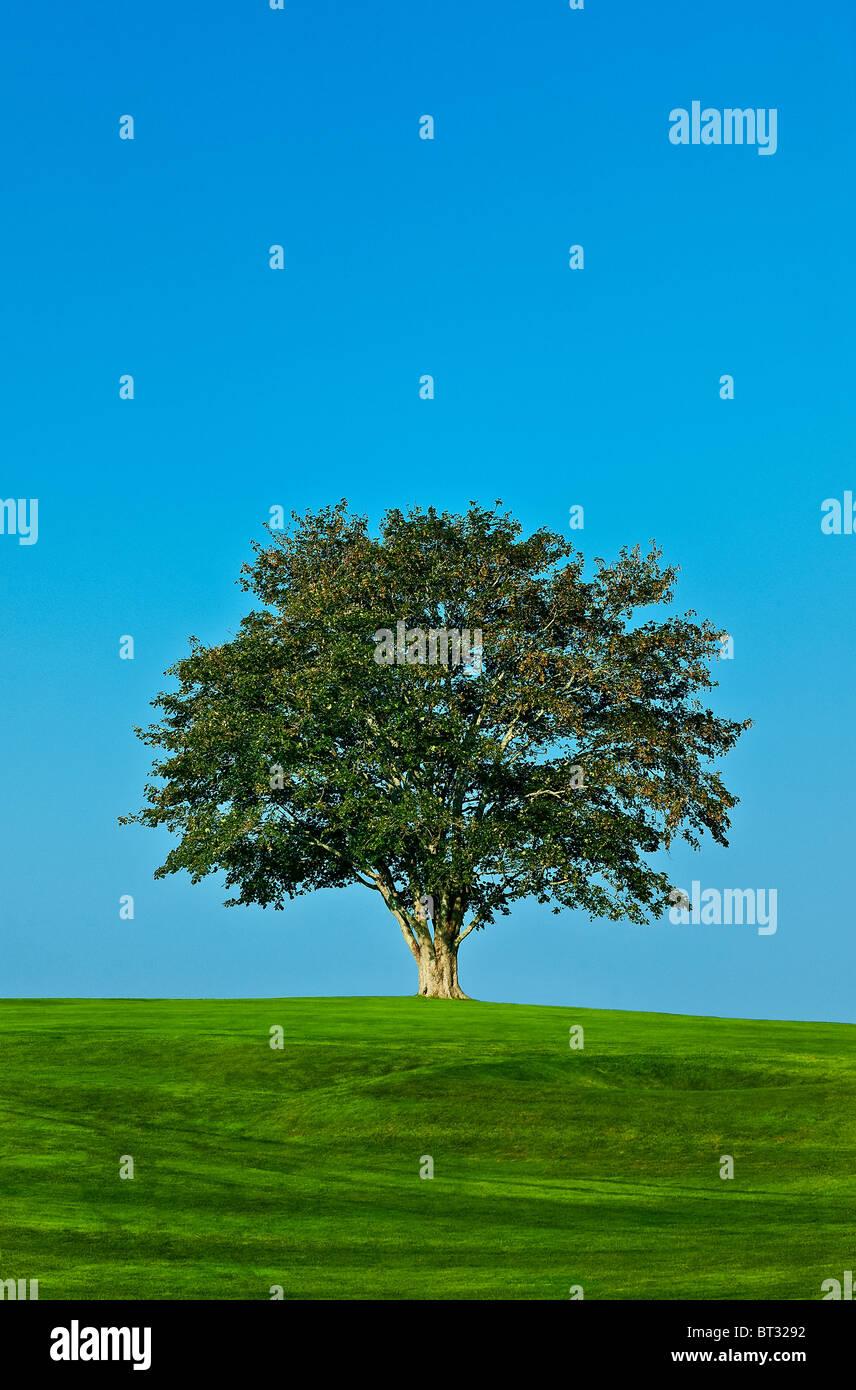 Gesunder Baum. Stockfoto
