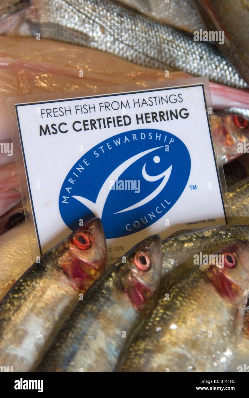 Hastings Frischfisch Marine Stewardship Council zertifiziert nachhaltigen Hering zum Verkauf an Rock-a-Nore Fischerei Stockbild