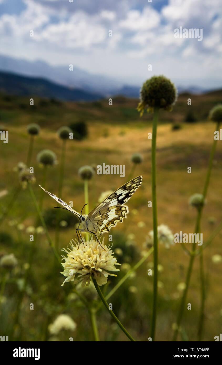 Schmetterling auf einer Blüte Stockbild