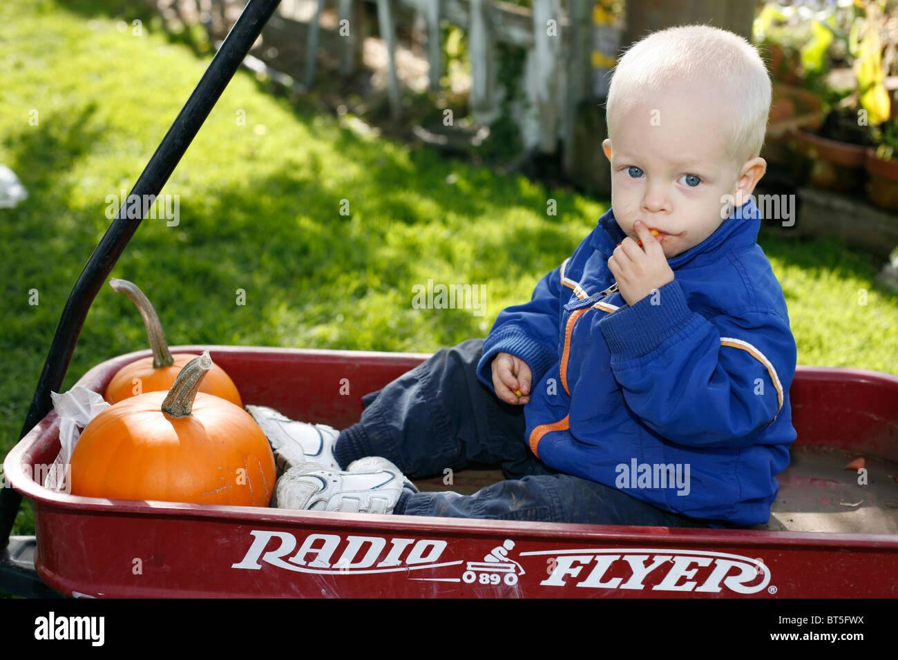 2 Jahre alter Junge in rot Radio Flyer Wagen mit Kürbissen. Stockfoto