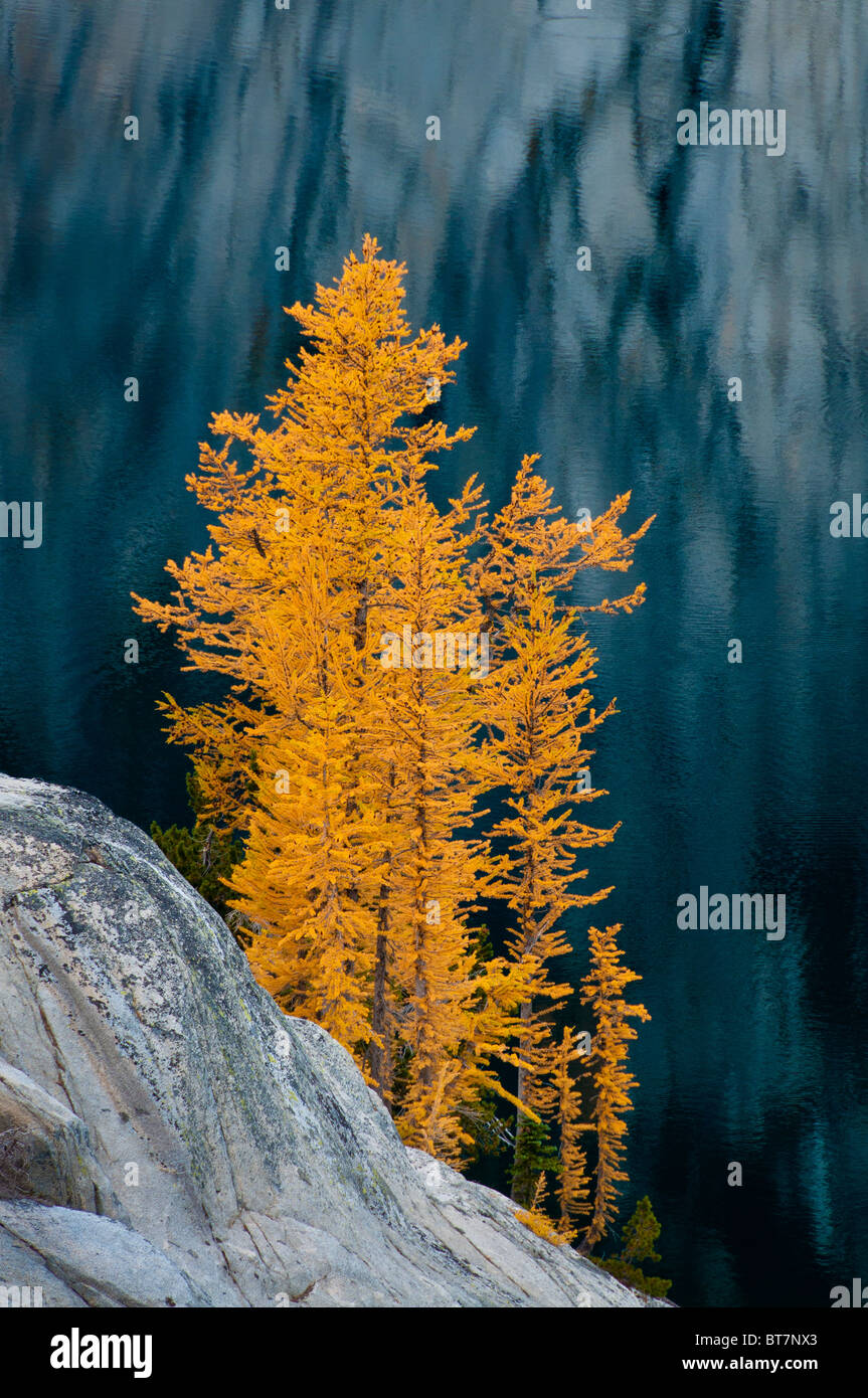 Alpine Lärchen im Herbst am See Viviane in die Verzauberungen, alpinen Seen Wildnis, Washington. Stockbild