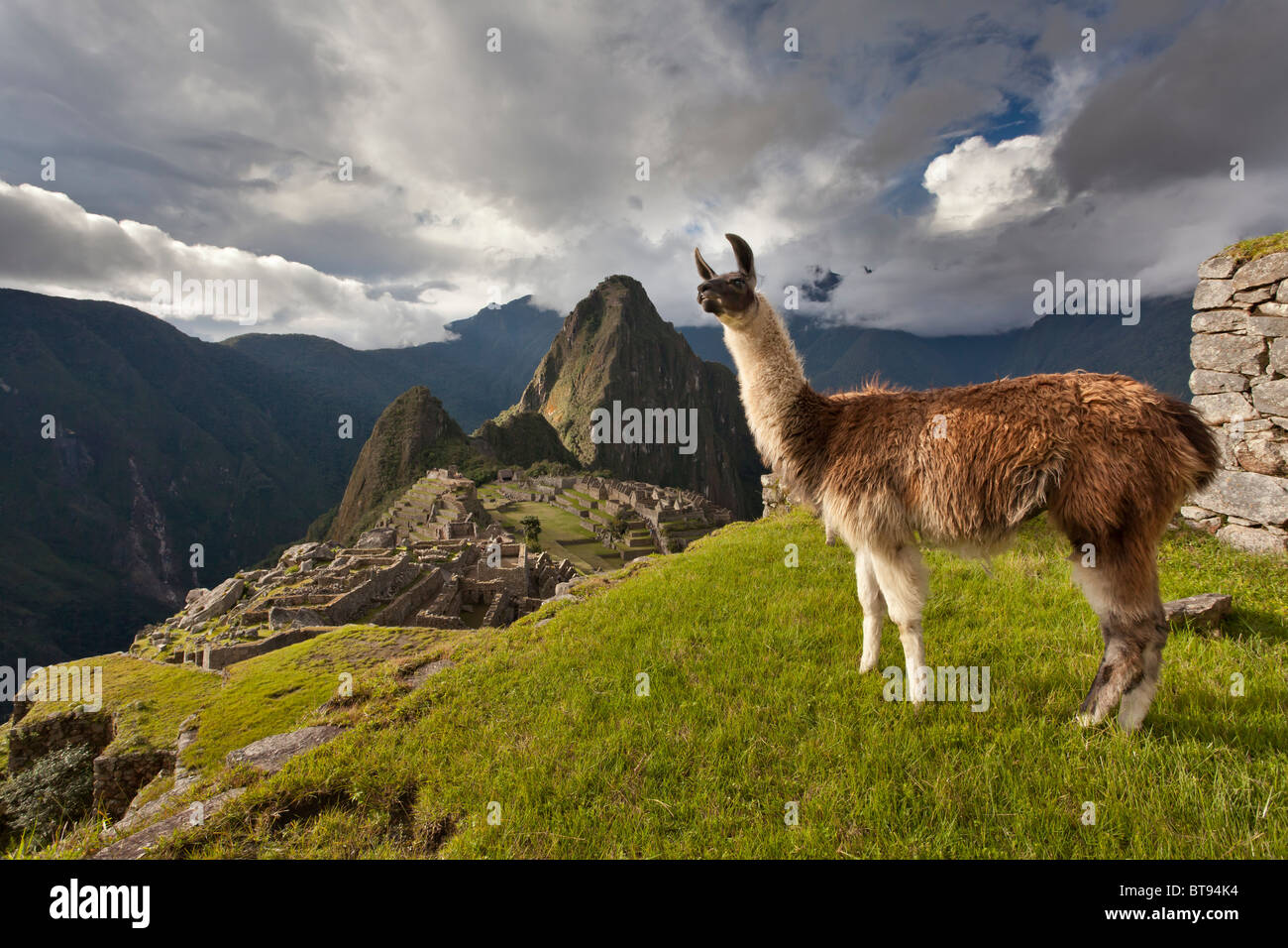 """Machu Picchu, die alten """"verlorene Stadt der Inkas"""", CA 1400, 2400 Meter.  Gipfel des Huaynapicchu (junger Stockbild"""