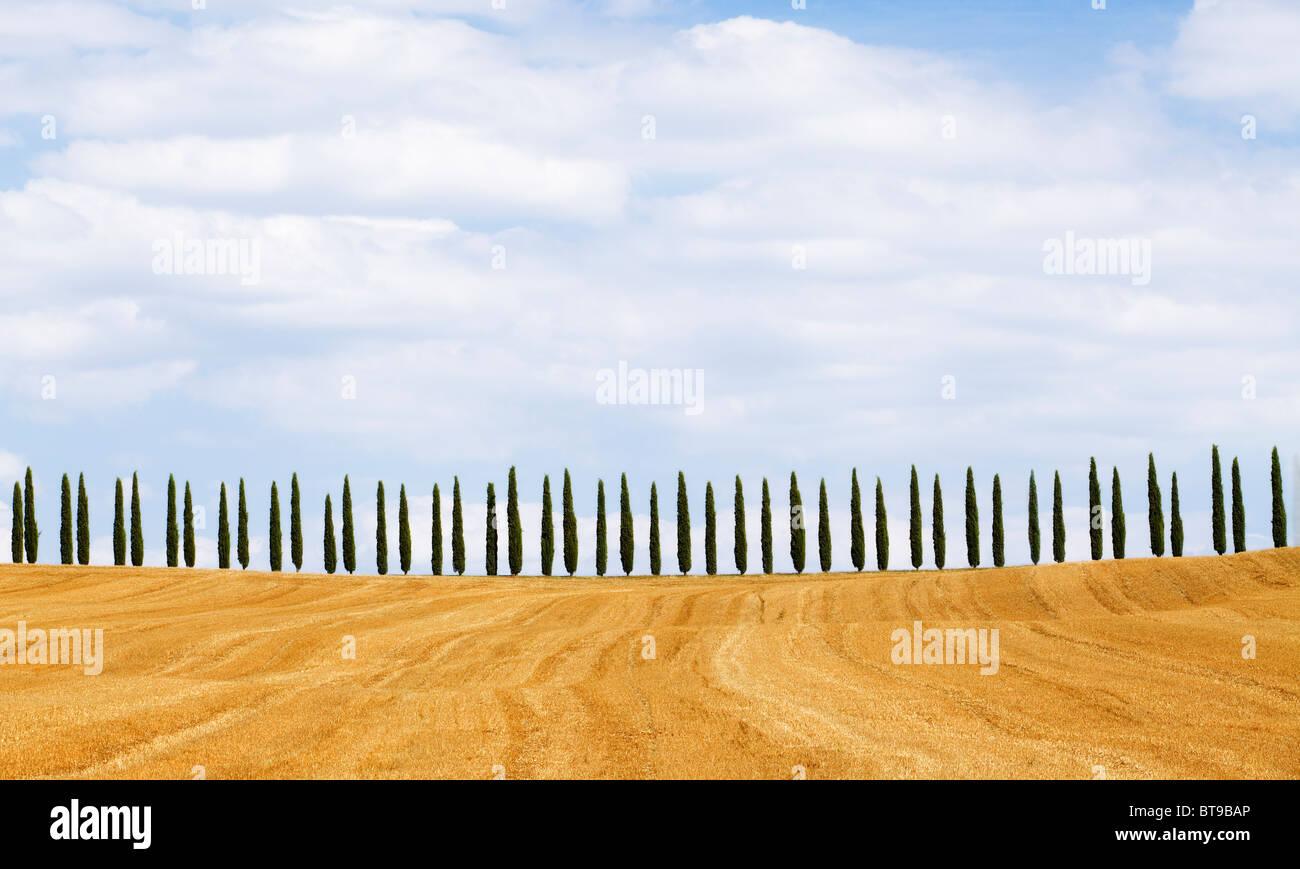 Zypressen auf Hügel, Toskana, Italien Stockbild