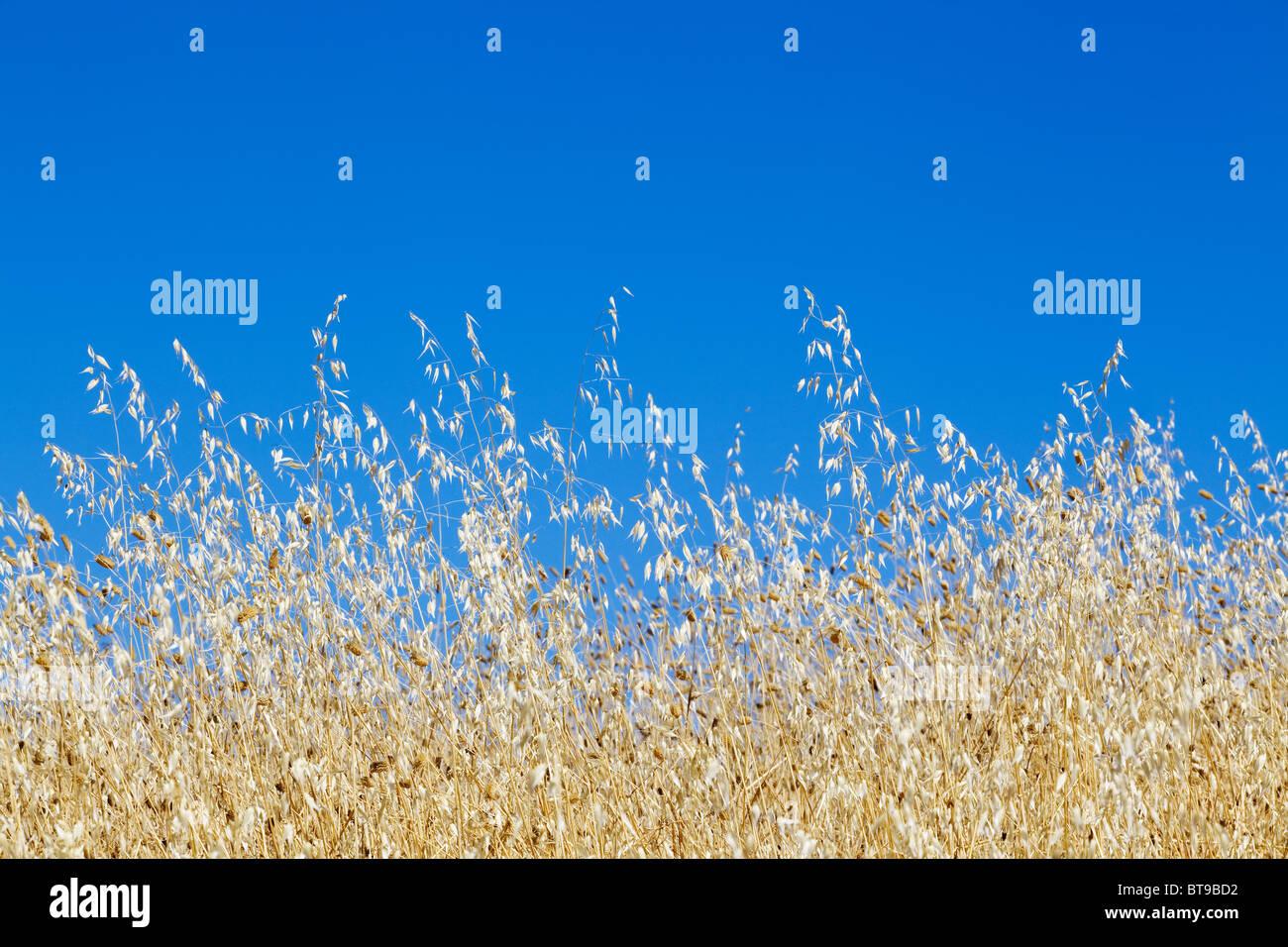Sommer Tage - blauer Himmel - Toskana, Italien, Stockbild