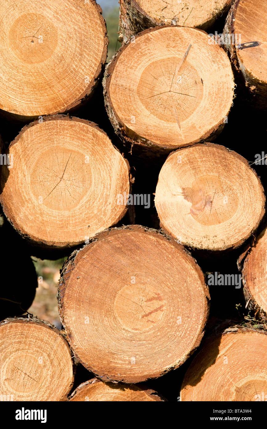 Neu gestapelt Felled Holz warten auf Transport aus dem Wald Stockbild