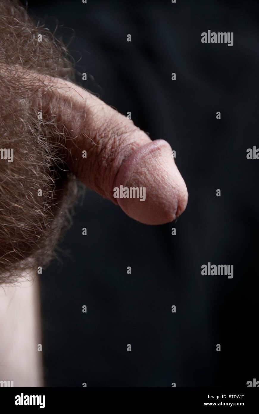 Allgemein bekannt ist, dass der Penis kleiner wird, wenn ihm kalt ist.