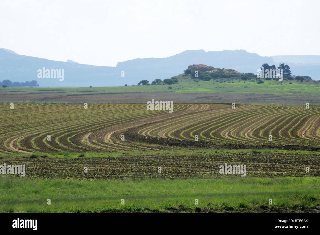 Ackerland mit Kontur Pflügen Stockbild