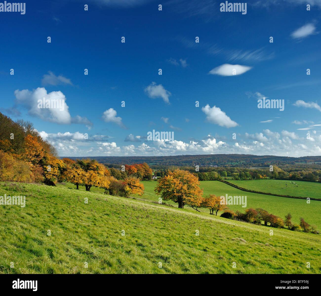 Der North Downs Way, Kent. Stockbild