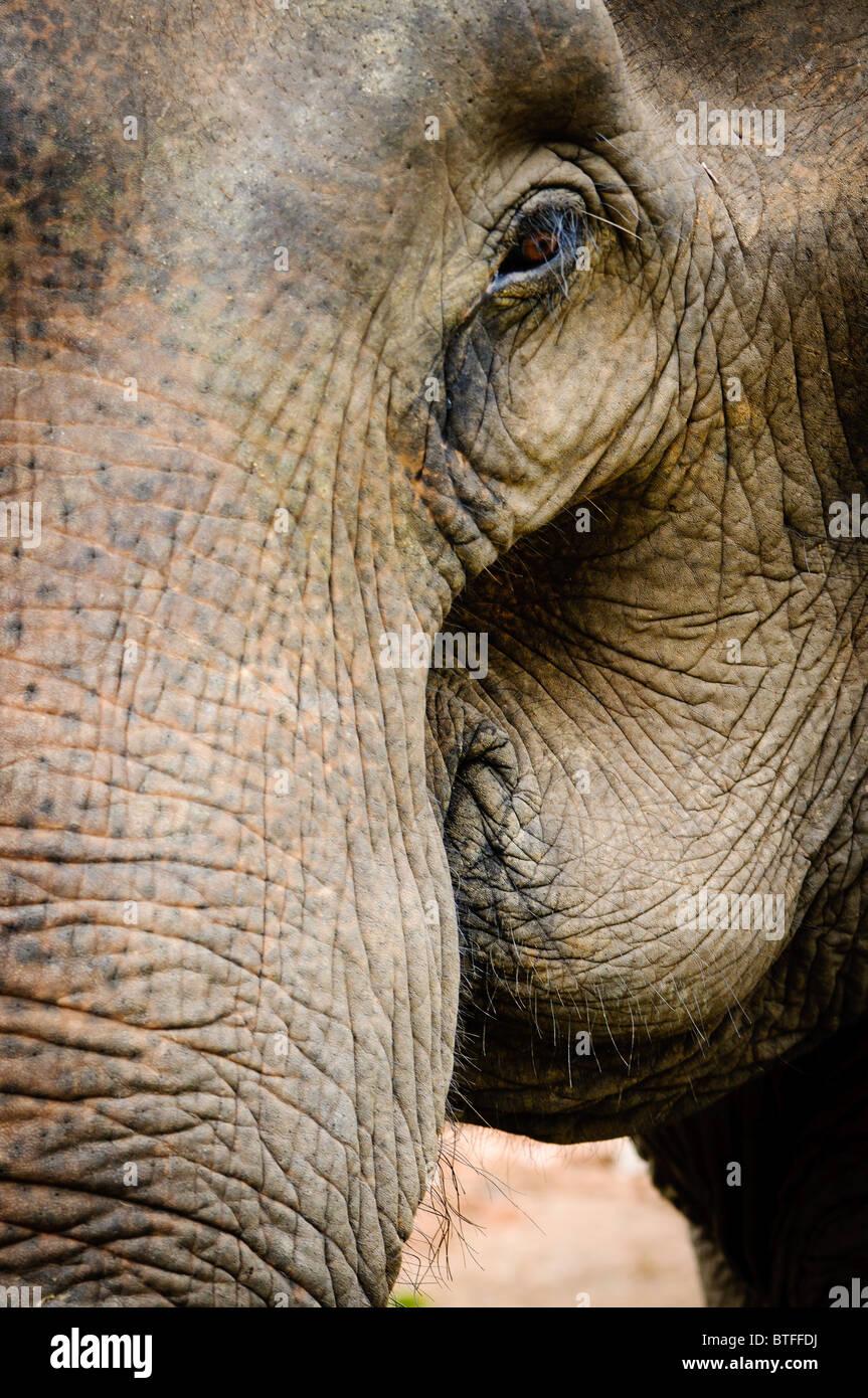 Wunderbar Elefanten Malvorlagen Für Die Vorschule Zeitgenössisch ...