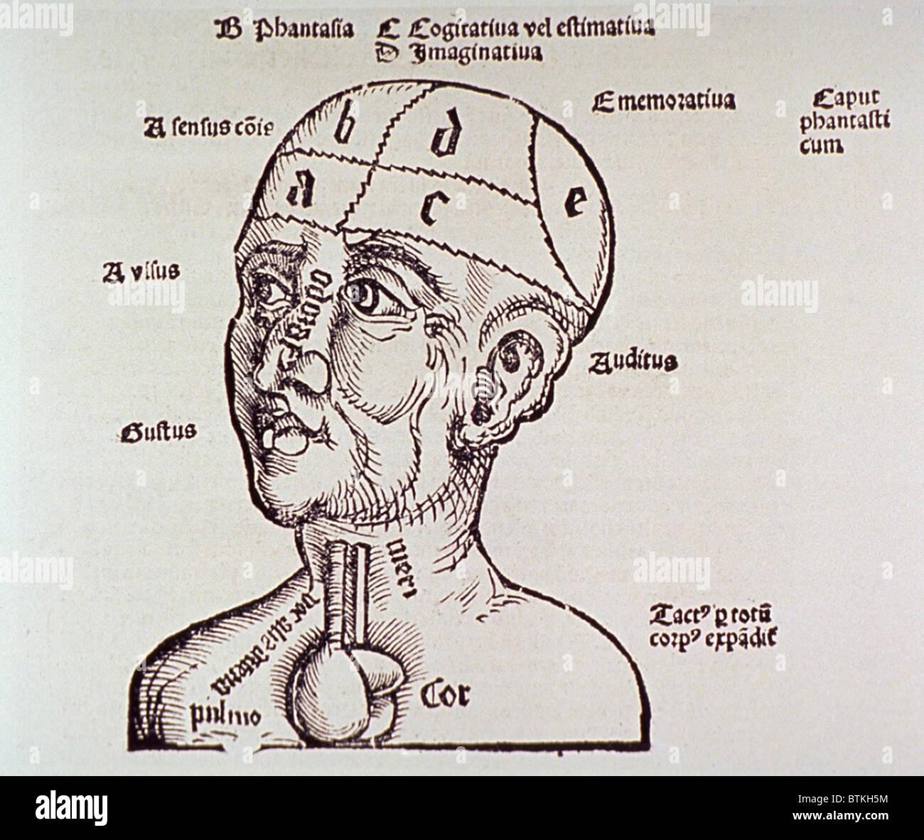 Ein menschlicher Kopf und Schultern mit Herz und Hirn gezeigt ...