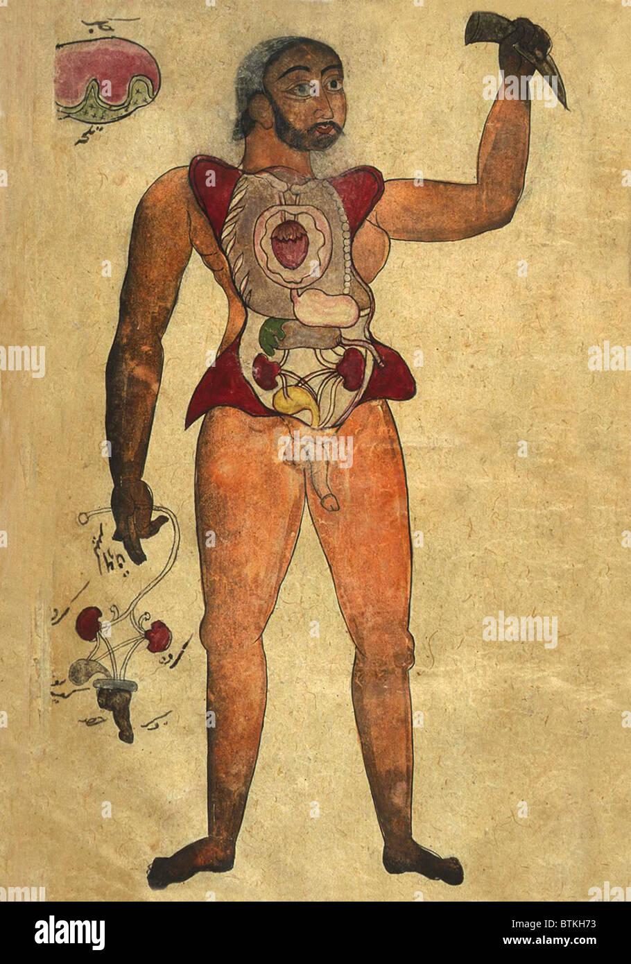 Anatomische Abbildung einer männlichen Figur mit seinem Bauch und ...