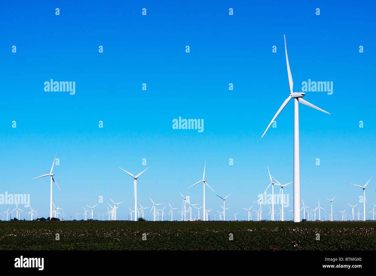 Bauernhof Windkraftanlagen steigen über Baumwollfelder im ländlichen Texas. Stockbild