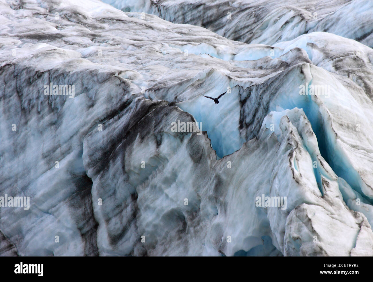 gemeinsamen Raven Corvus Corax Eiskappe überfliegen Stockbild