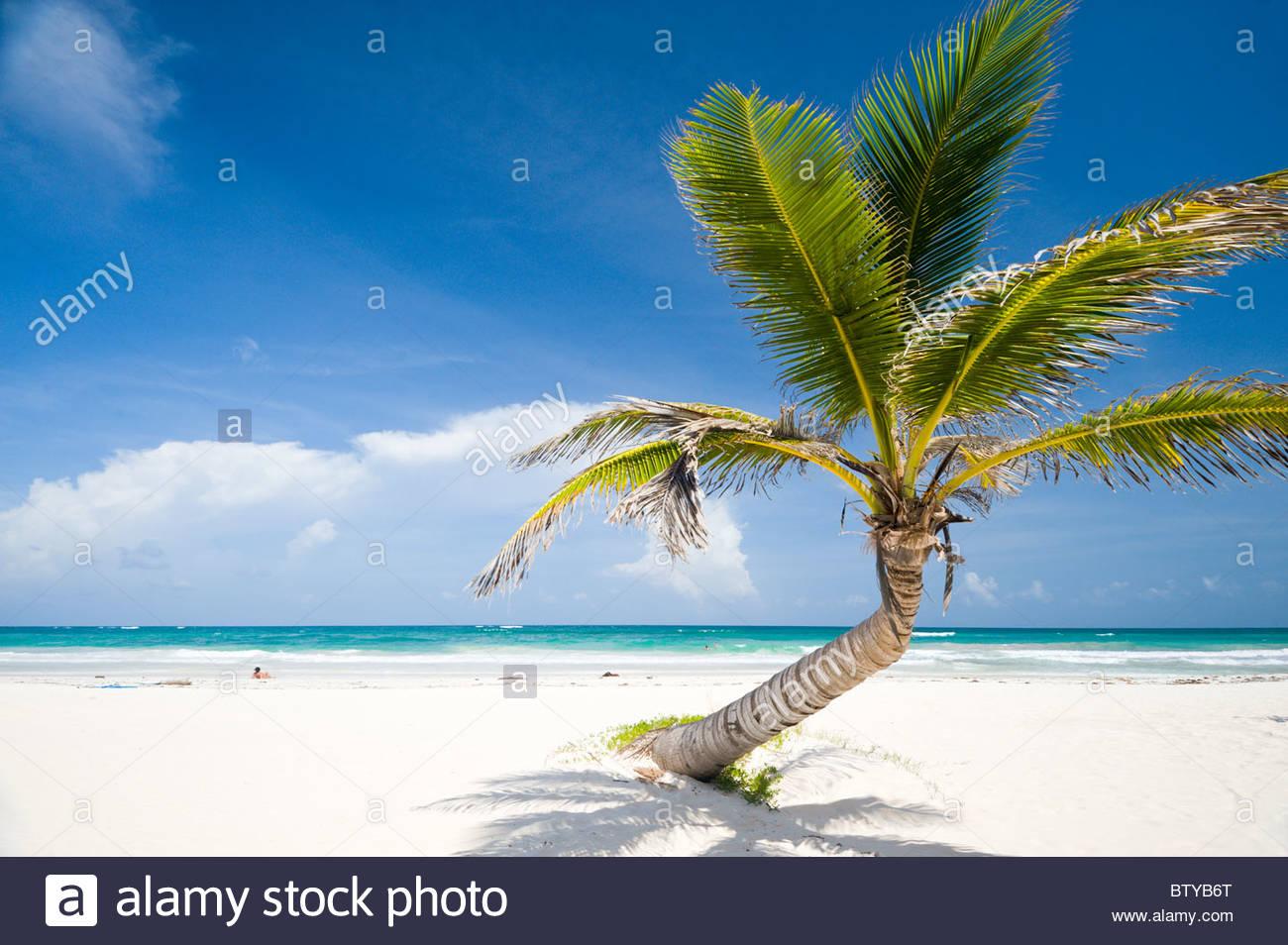 Palme am Strand von Tulum, Quintana Roo, Halbinsel Yucatan, Mexiko. Stockbild
