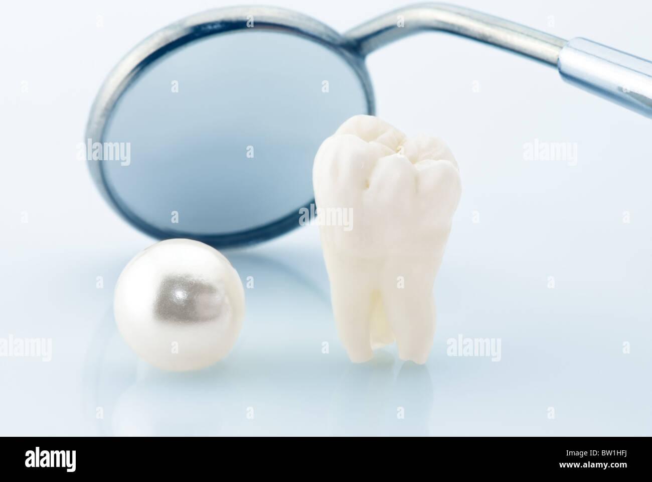 Gesunde Zähne-Konzept. Echte menschliche Weisheitszahn, natürliche ...