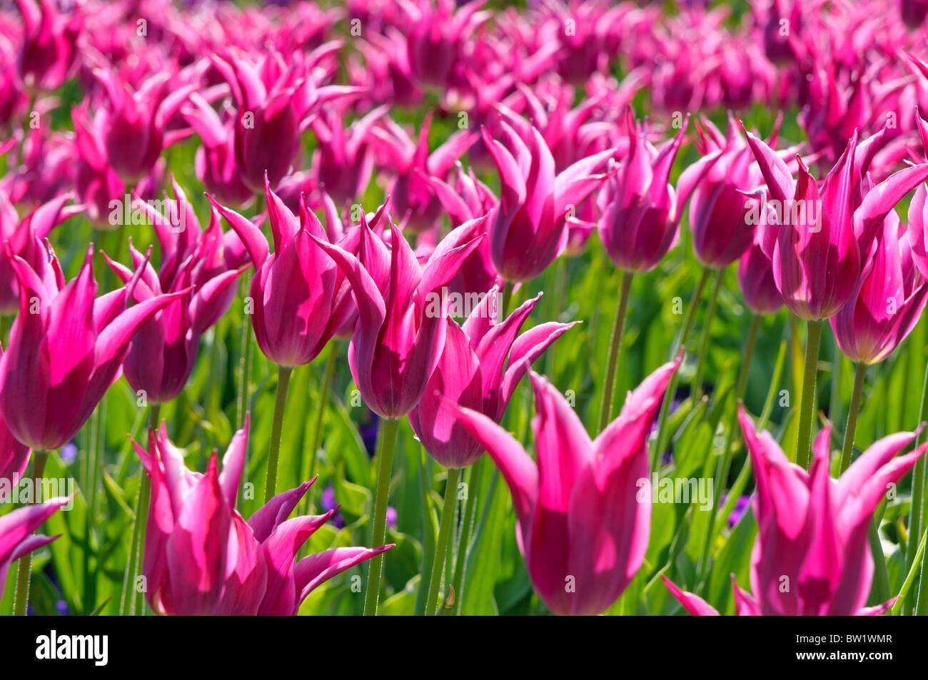 Wiesenblumenstrauß Stockfotos & Wiesenblumenstrauß Bilder