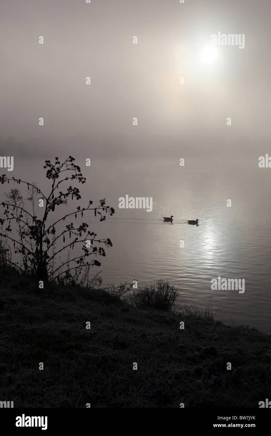 Zwei Enten schwimmen über einen dunklen nebligen See Stockbild