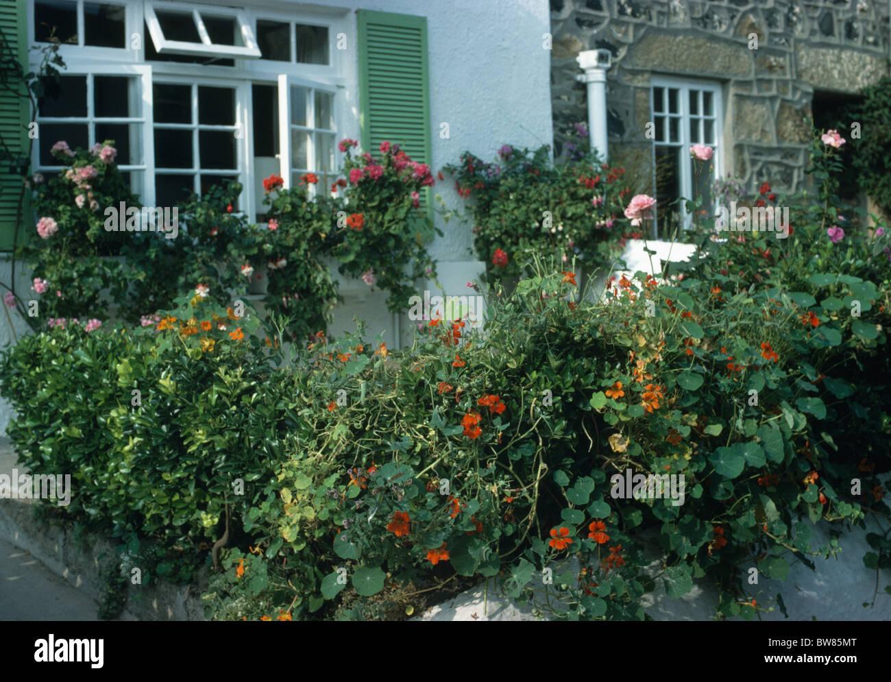 Orangefarbene Kapuzinerkresse Am Zaun Vor Der Kleinen
