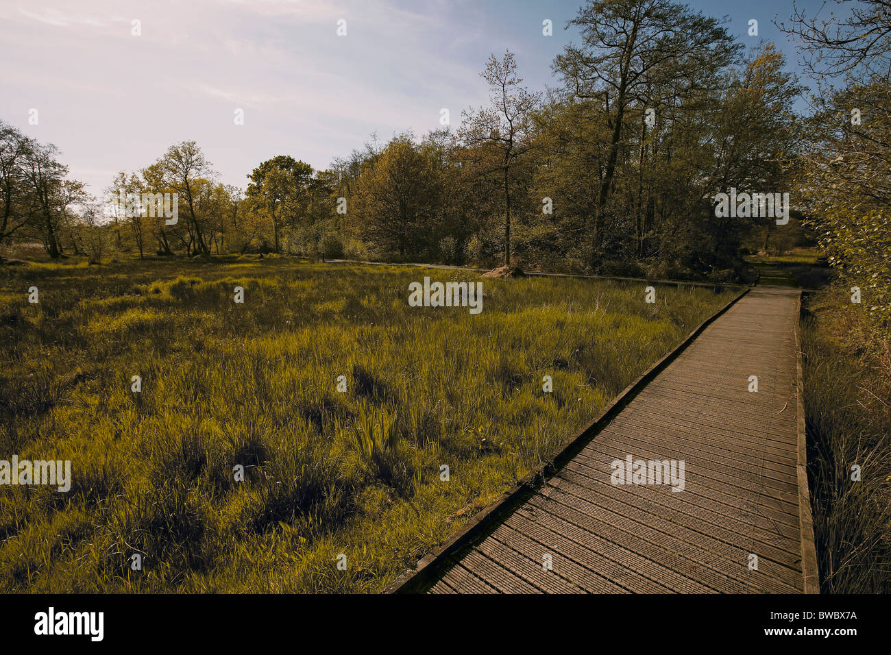Promenade rund um Askham Moor Naturschutzgebiet verwaltet von der Yorkshire Wildlife Trust York, UK Stockbild