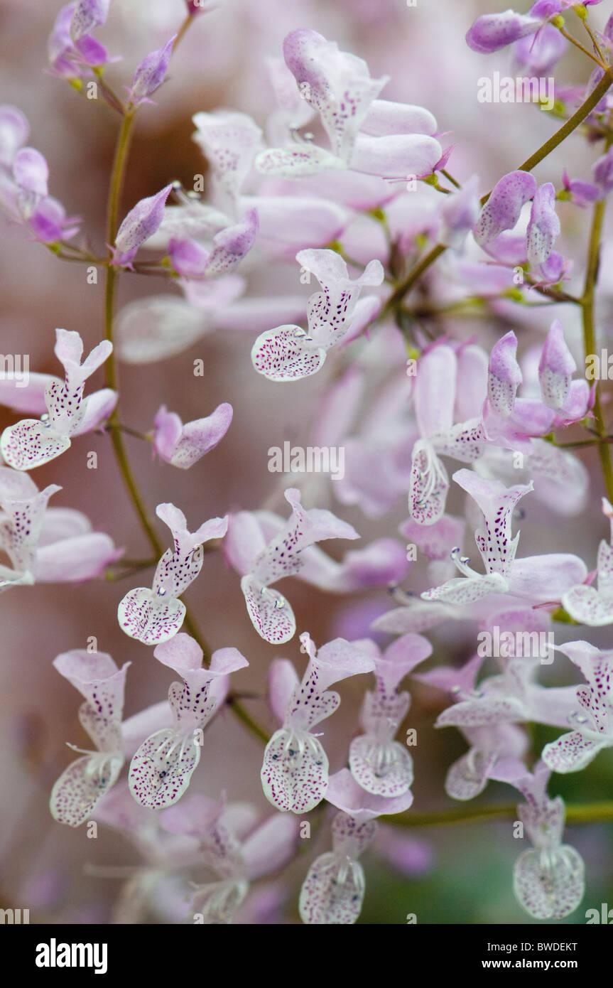Kleine weiche lila Orchidee blüht Stockbild