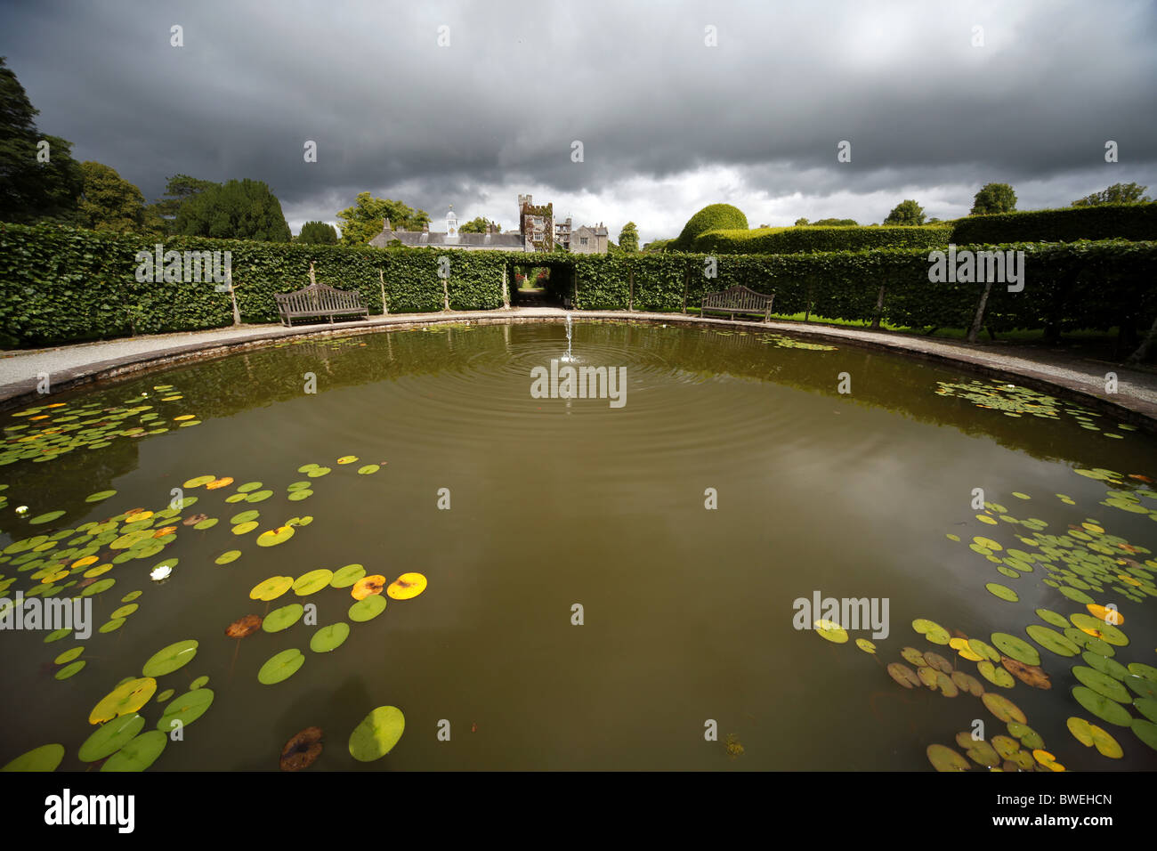 Wasser-Lilien im Teich LEVENS HALL KENDAL, CUMBRIA LEVENS HALL CUMBRIA ENGLAND KENDAL, CUMBRIA ENGLAND 17. August Stockbild