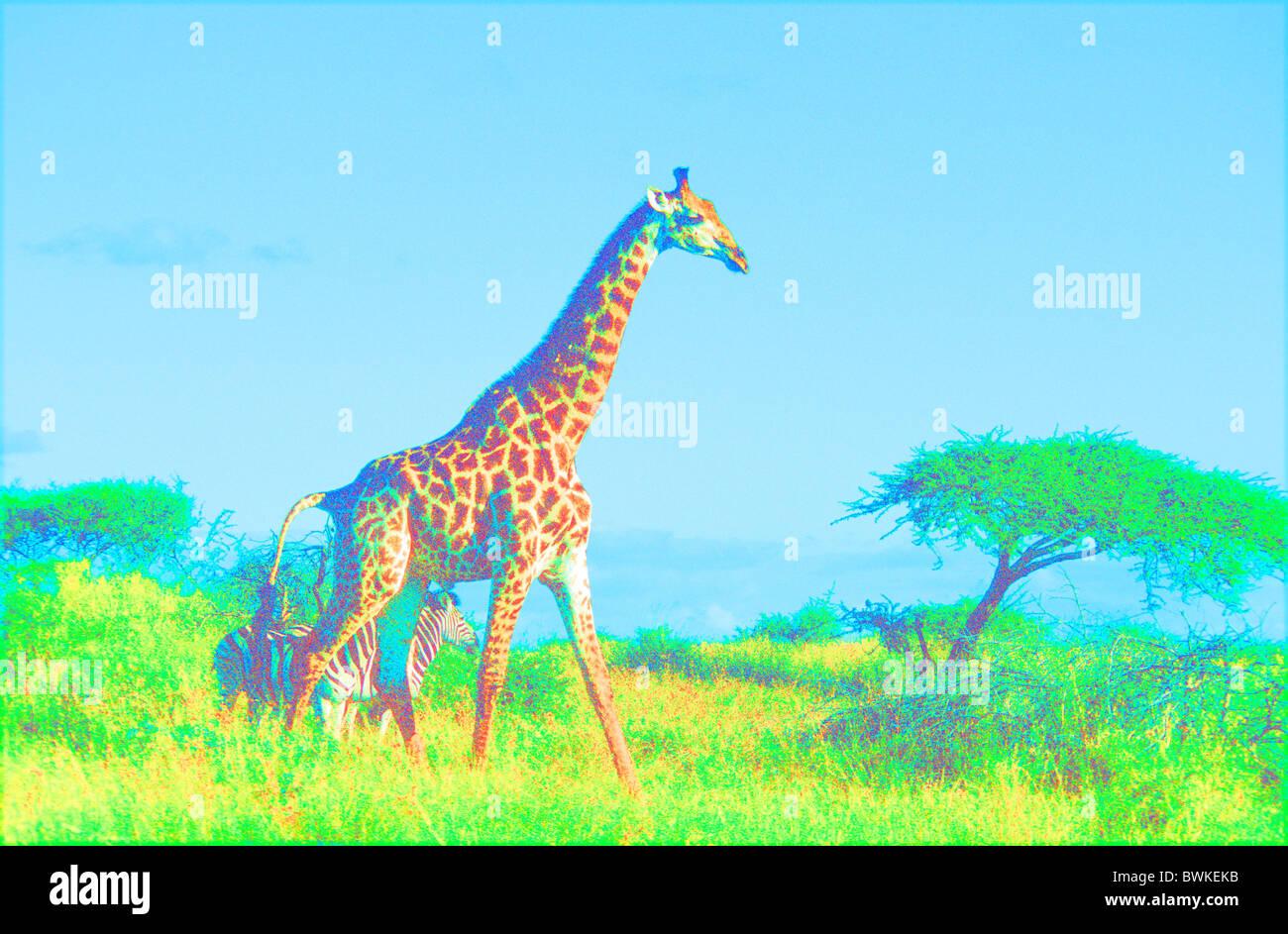 Computer Graphik Grafik Giraffe Zebra Tiere Afrika Savanne Effekt falschen Farben Tiersymbol Stockbild
