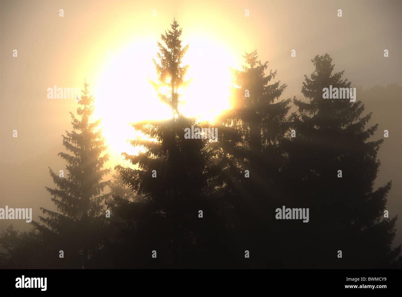 Deutschland Europa Schwarzwald Titisee Holz Wald Sonnenaufgang Bäume Nebel Nebel Sonne Aureole Corona Stimmung Stockbild