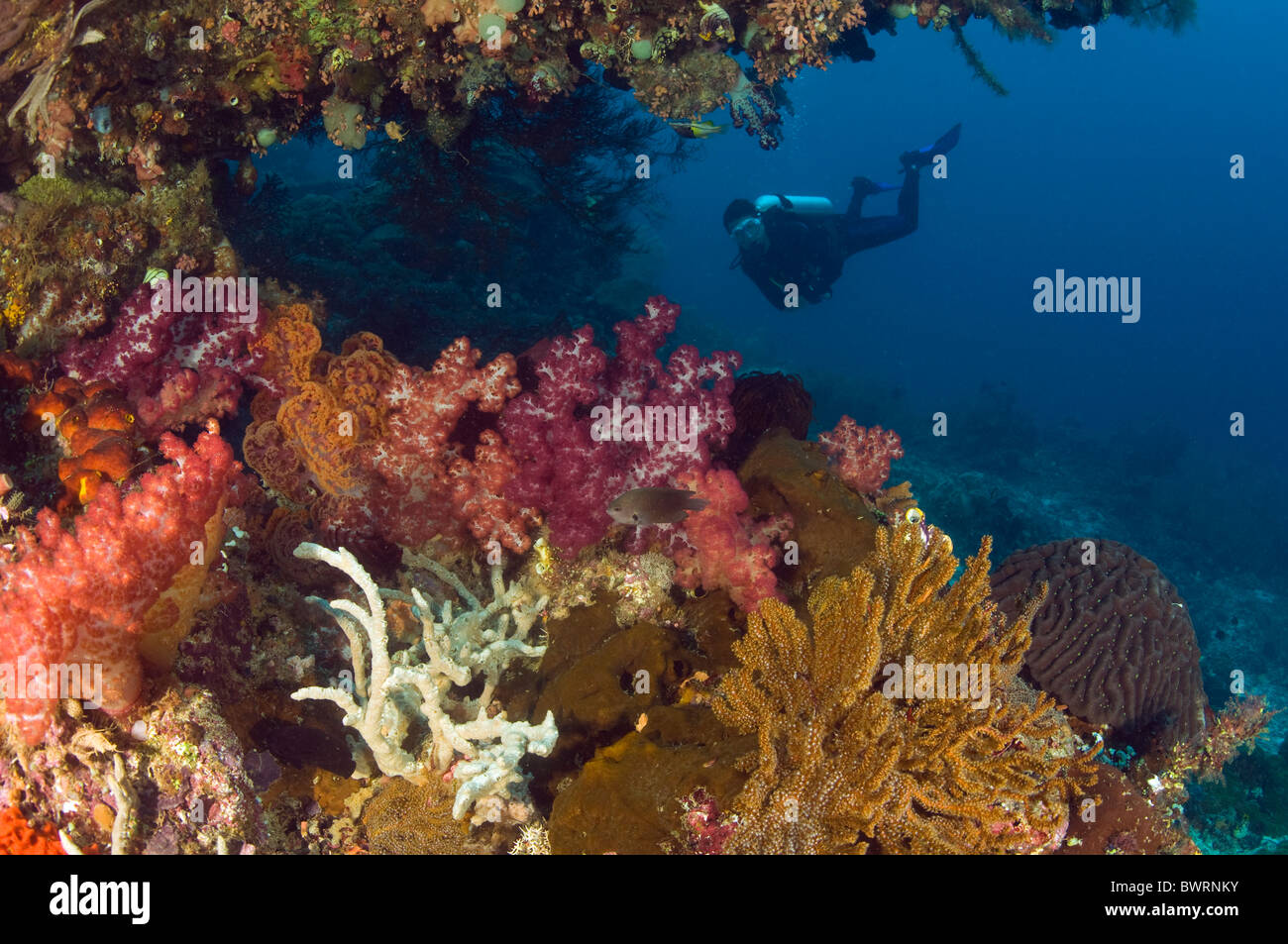 Riff malerische Raja Ampat Indonesien Stockbild