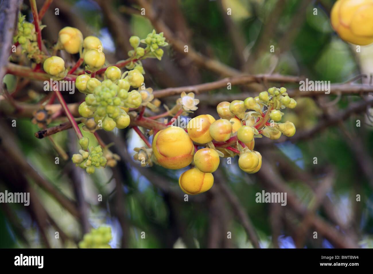 Bleistiftpflanze gr ser im k bel berwintern for Evergreen pflanzen