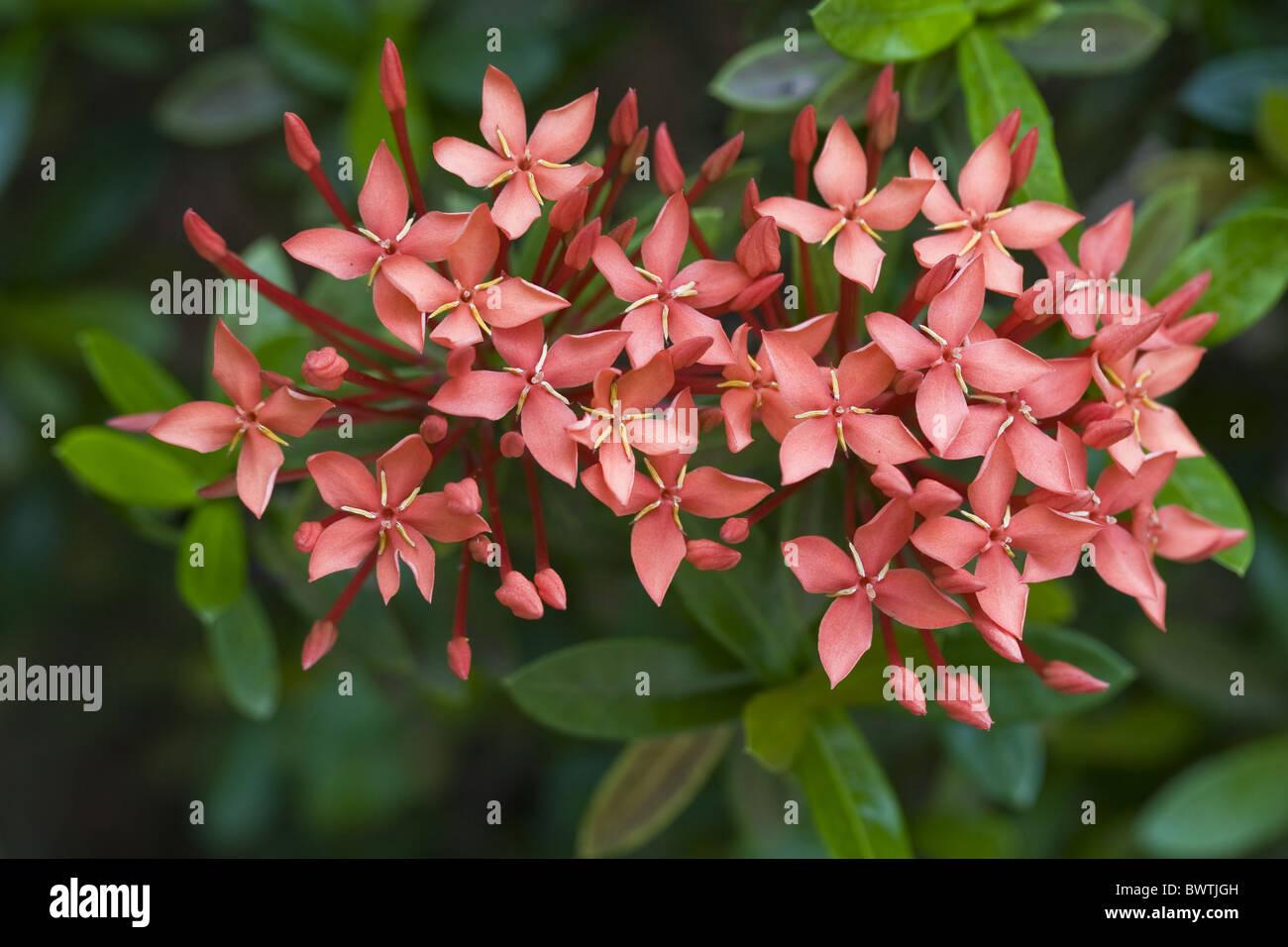 Asiatische Pflanzen asiatische blüte blüten nah nahaufnahme nahaufnahmen