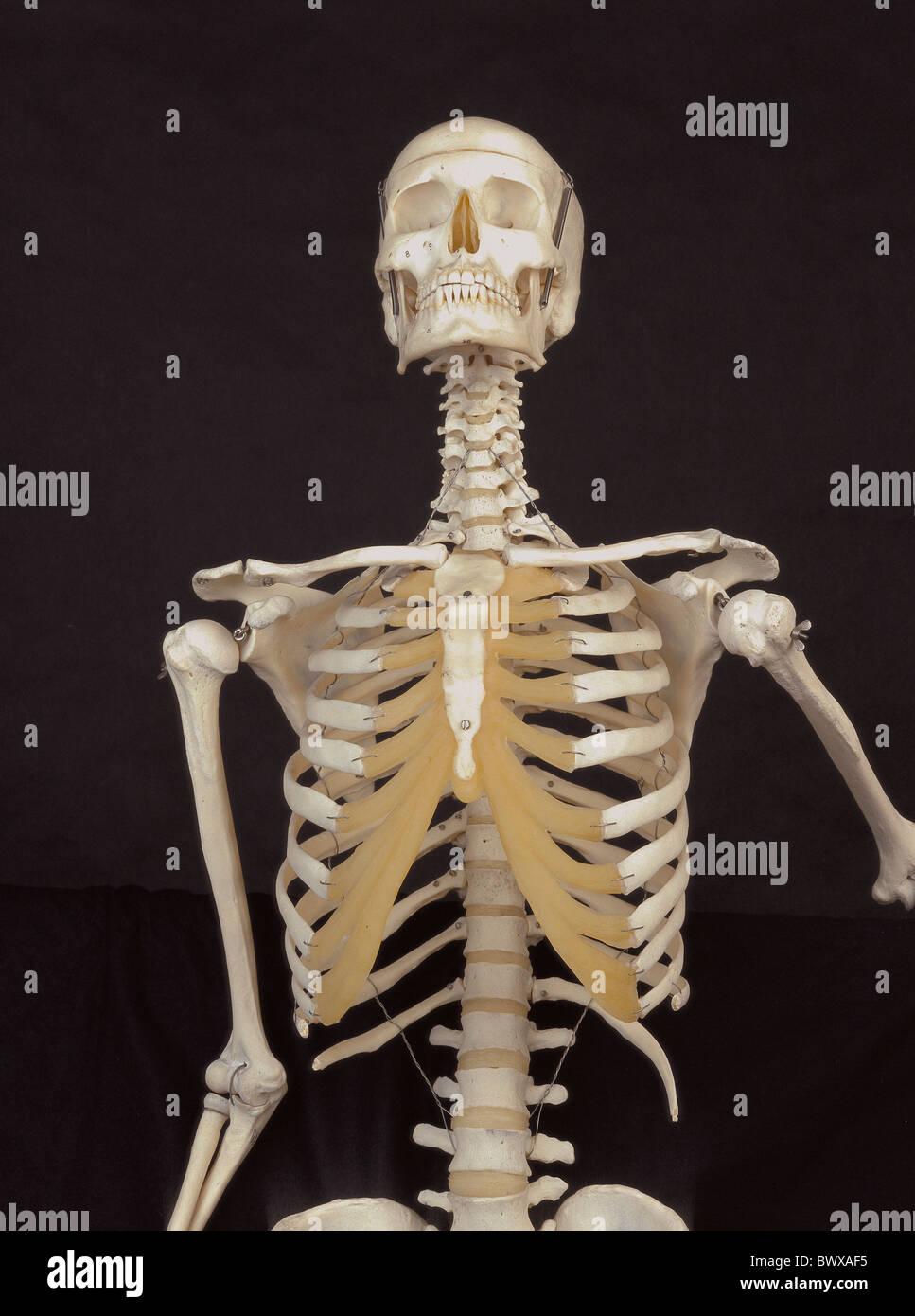 Fantastisch Anatomie Skelett Kennzeichnung Ideen - Menschliche ...