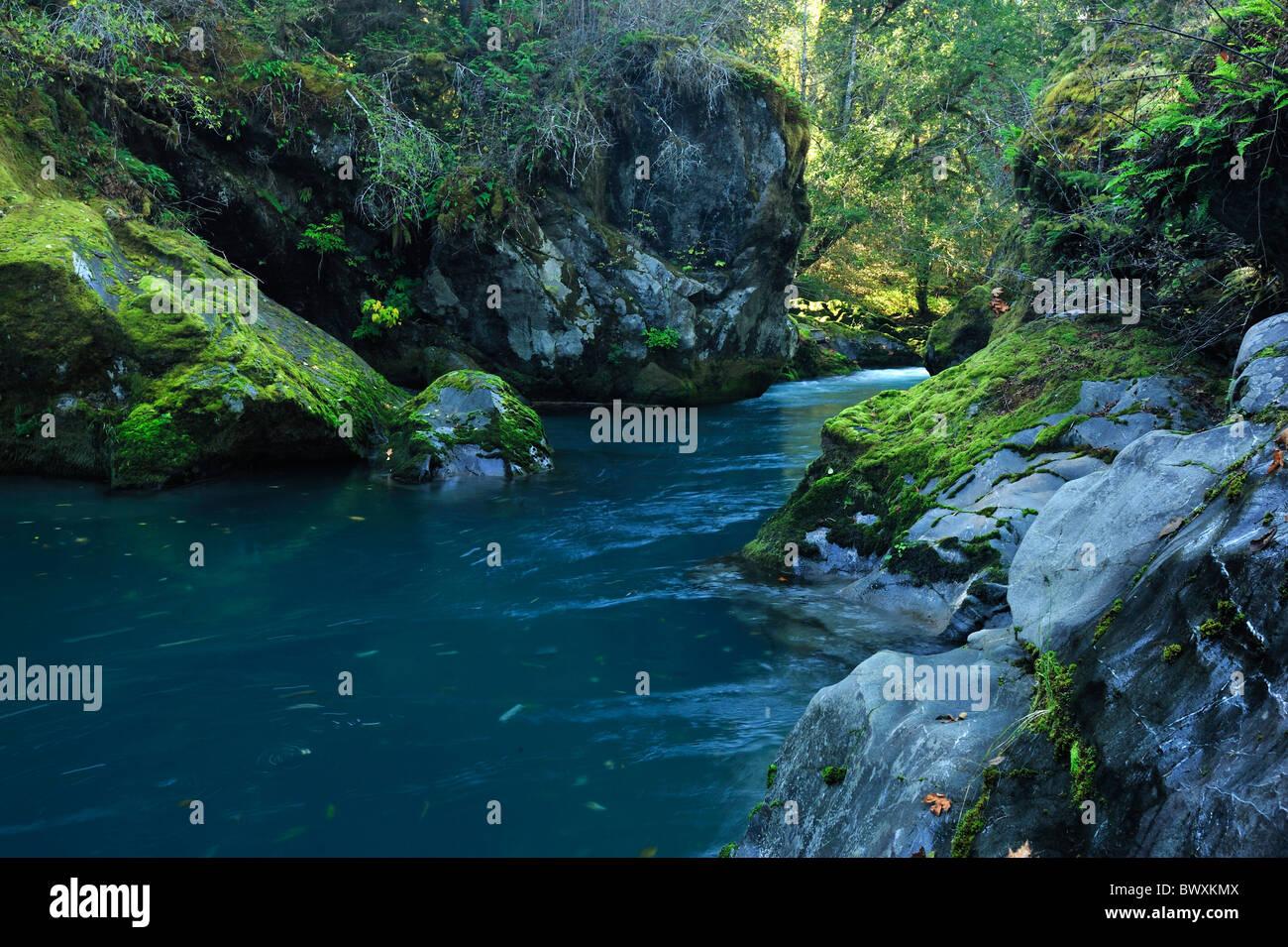 Dosewallips River Basin, Washington Stockbild
