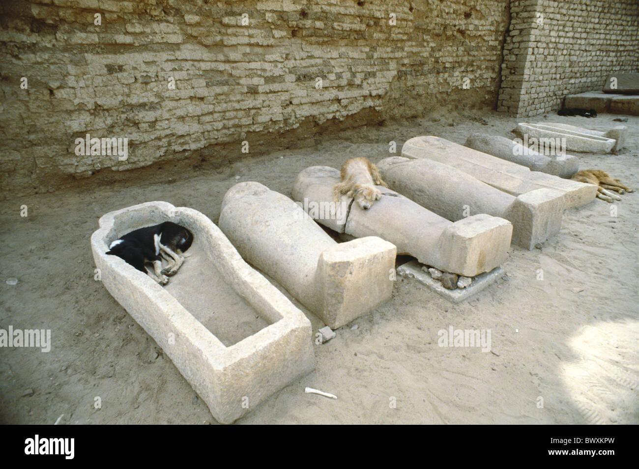 Agypten Nordafrika Hunde Sarkophage Schlafen Skurrilen Humor Tiere