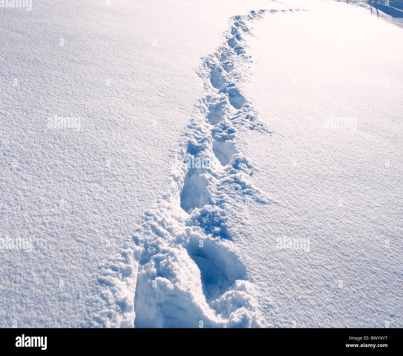 foot print Fußabdrücke Schnee Spuren Spuren tief verschneiten winter Stockbild