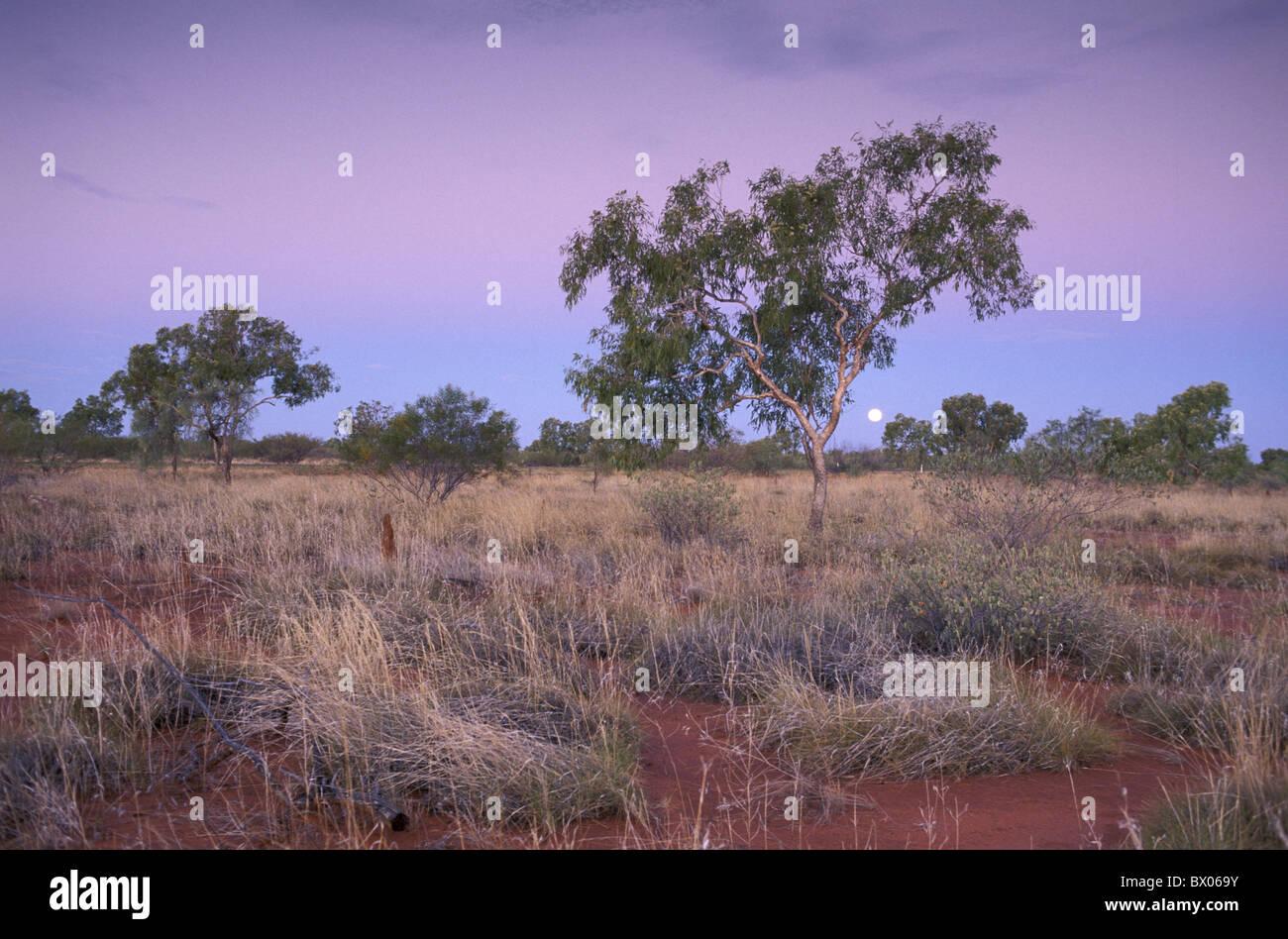 Barkly Homestead Australien Abenddämmerung Northern Territory Outback Landschaft Wüstenlandschaft Bäume Stockbild