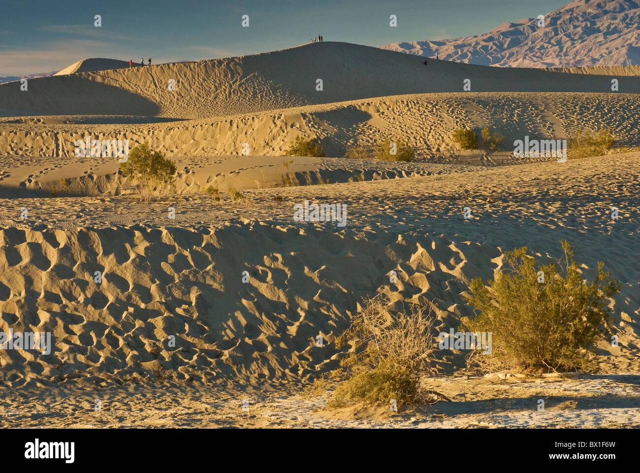 Mesquite flache Sanddünen getrübt durch Fußabdrücke bei Sonnenuntergang, Death Valley Nationalpark, Kalifornien, Stockfoto