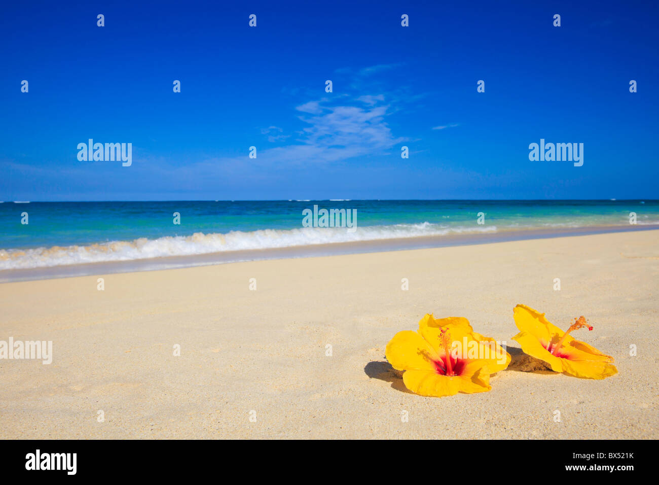 beach hibiscus stockfotos beach hibiscus bilder alamy. Black Bedroom Furniture Sets. Home Design Ideas
