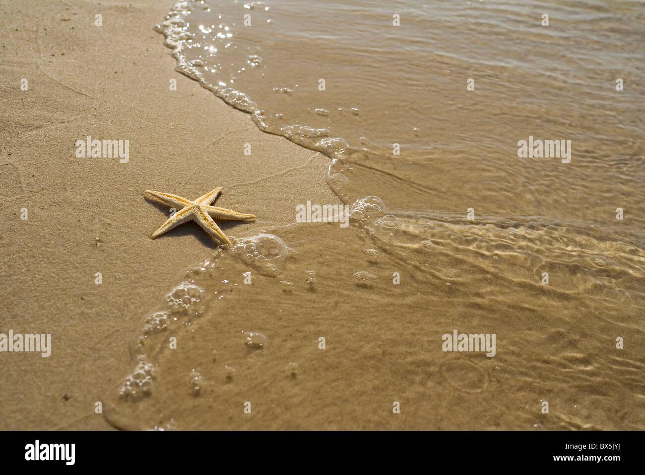 der Seestern am Strand Stockbild