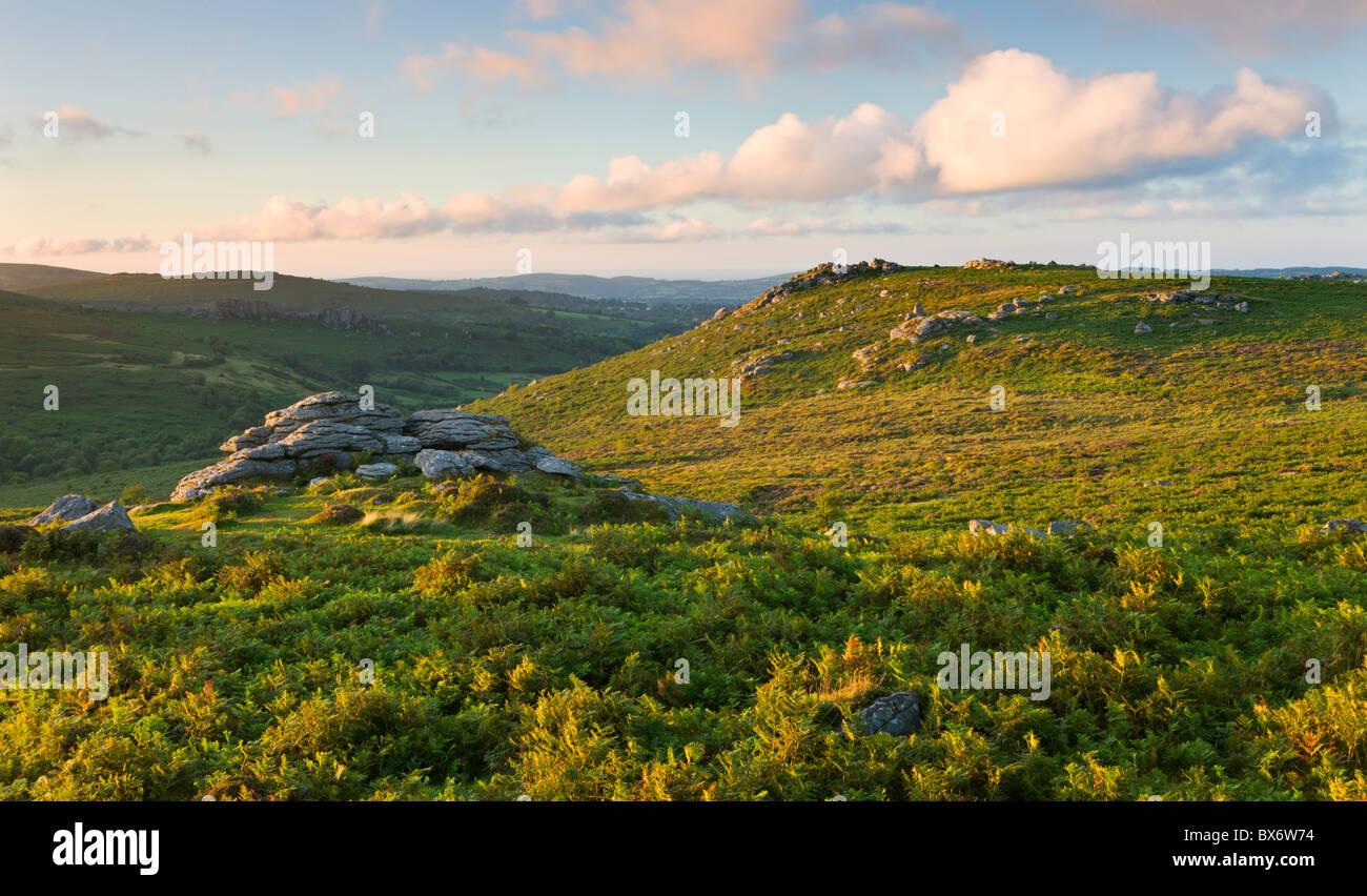 Blick über Adlerfarn bedeckt Moor nach Holwell Tor, Dartmoor National Park, Devon, England. Sommer (August) Stockbild