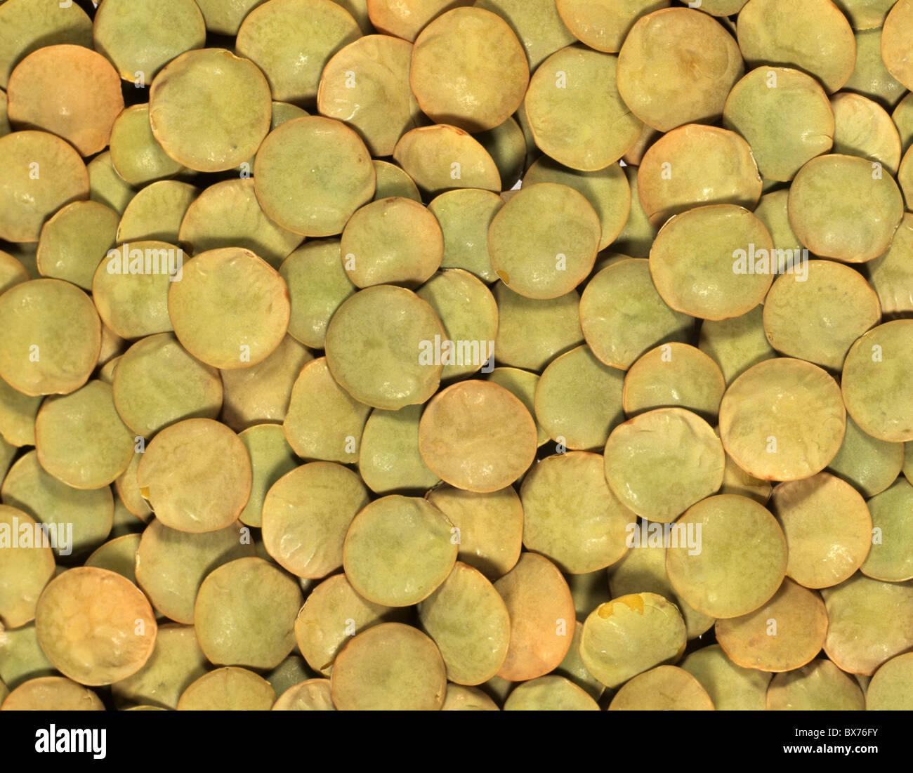 Grüne Linsen (Lens Culinaris) vorbereitet für das Kochen eine kanadische Sorte Stockbild