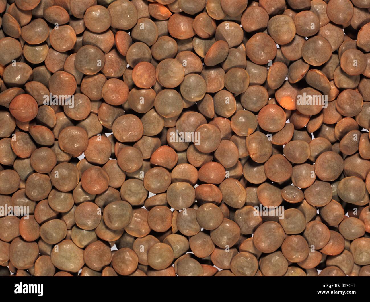 Braune Linsen (Lens Culinaris) vorbereitet für das Kochen, zu produzieren, der Türkei Stockbild