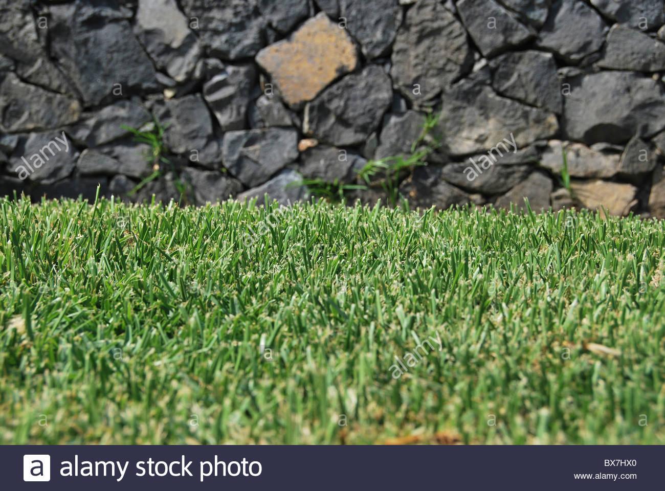 Vor kurzem geschnittenen Rasen. Gartenarbeit und Ökologie-Konzept Stockbild
