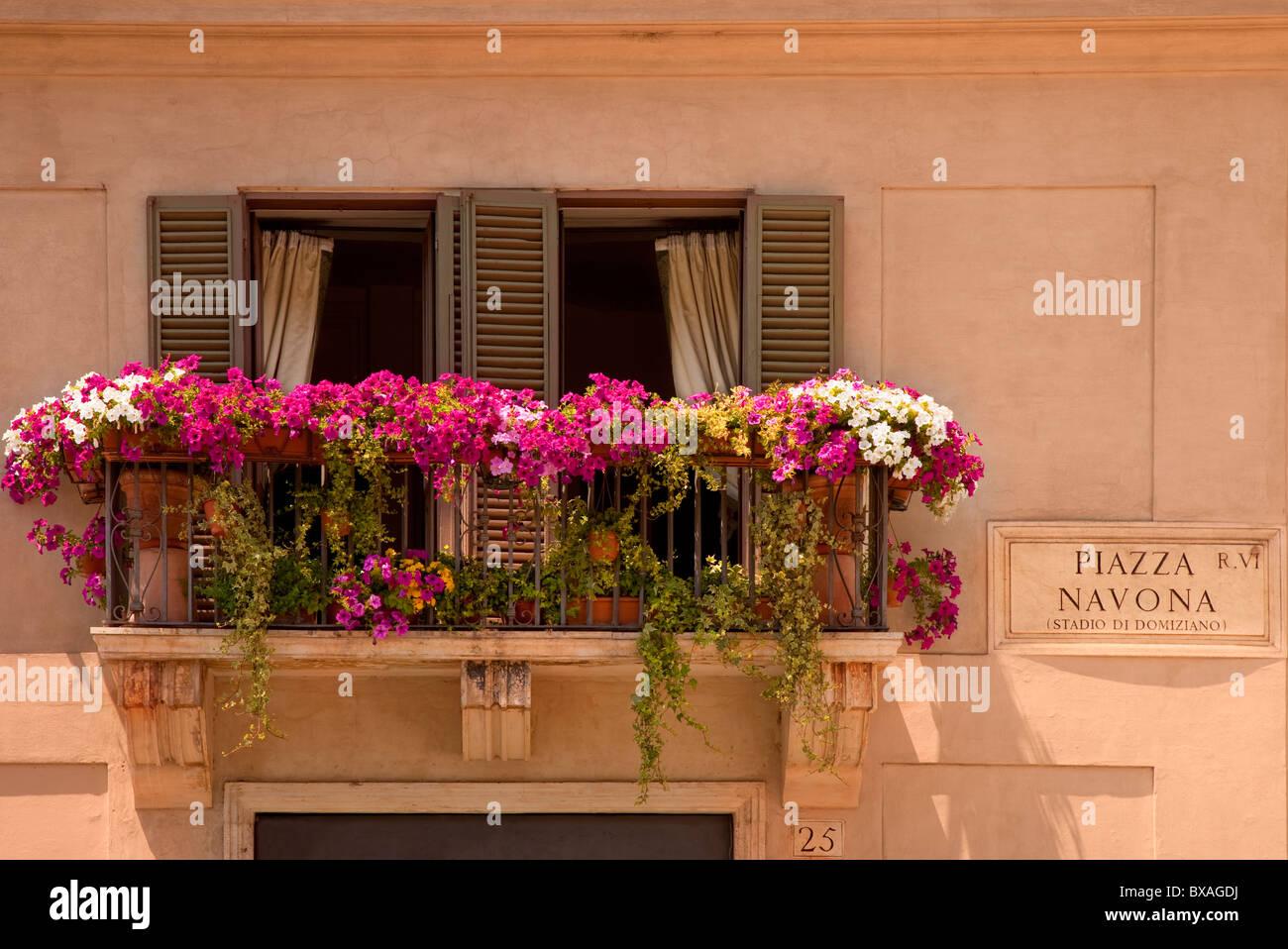 Blumen blühen auf dem Balkon mit Blick auf Piazza Navona in Rom Italien Stockbild