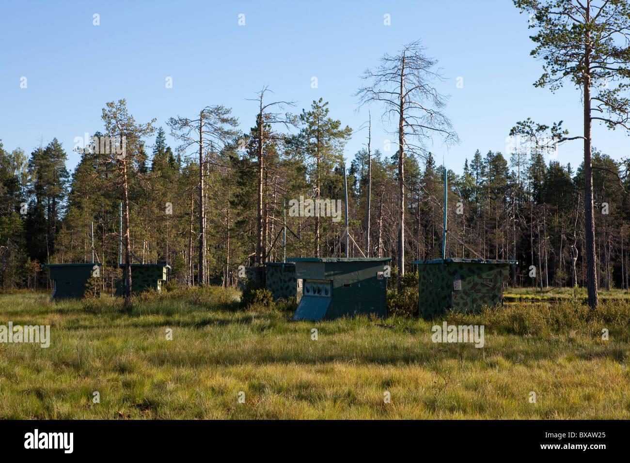 Versteckt sich in wilde Braunbären Einrichtungen, Vartius, Lentiira, Finnland Stockbild