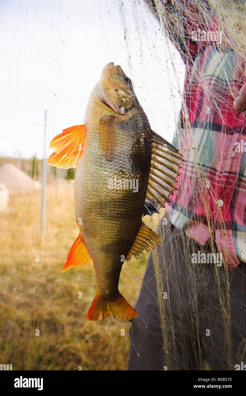 Fischer hält Fischernetz mit Fisch Stockfoto