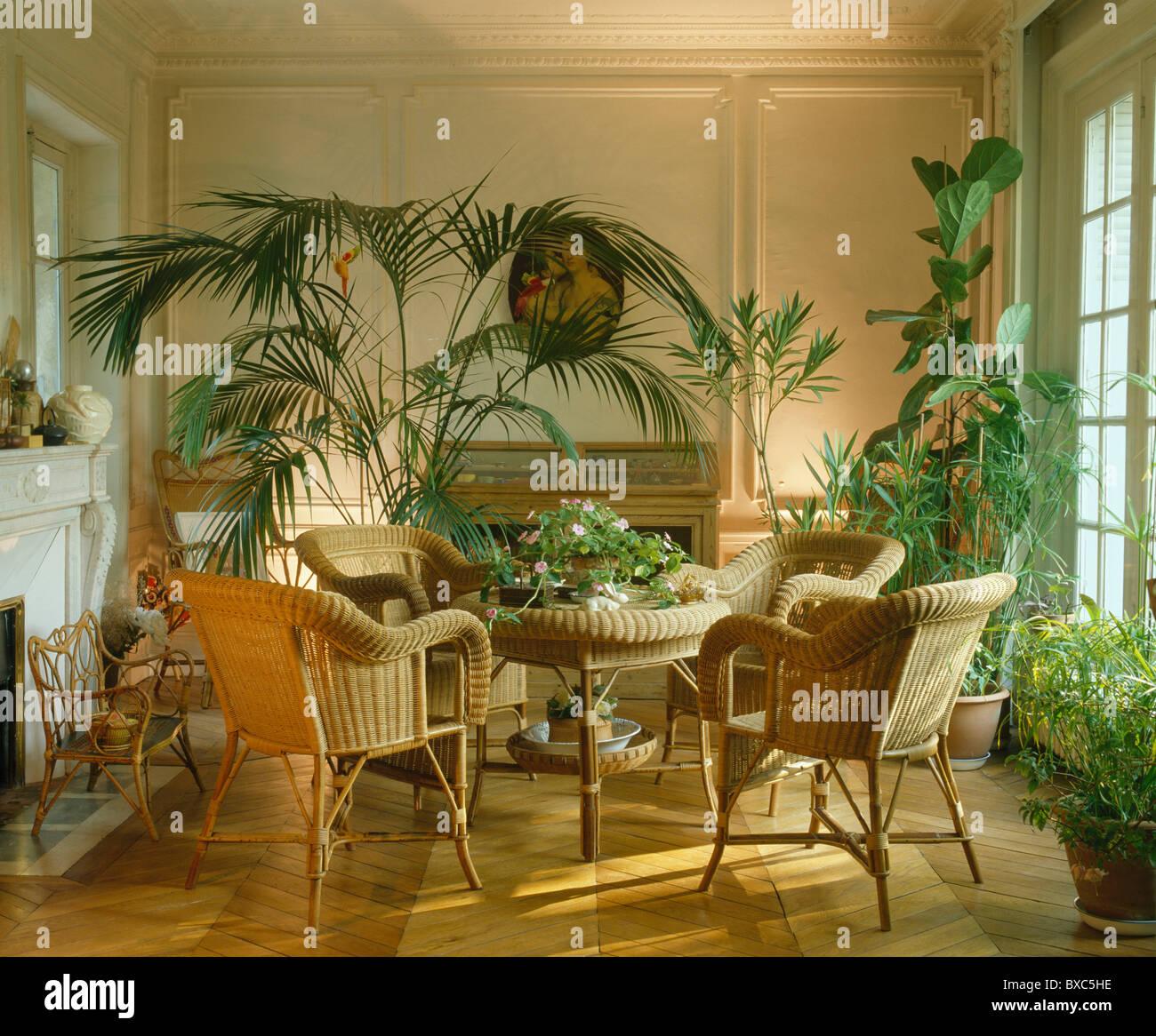 rohrstock st hle tisch mit topfpflanzen palmen und ppigen gr nen zimmerpflanzen in. Black Bedroom Furniture Sets. Home Design Ideas