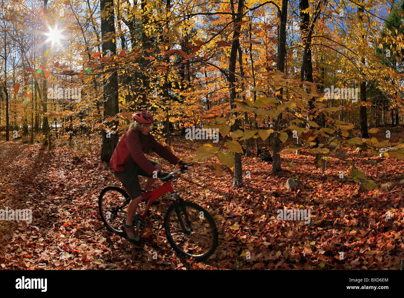 Mountainbiker fahren durch Herbst Blätter, Adirondack Park, New York State, USA Stockbild