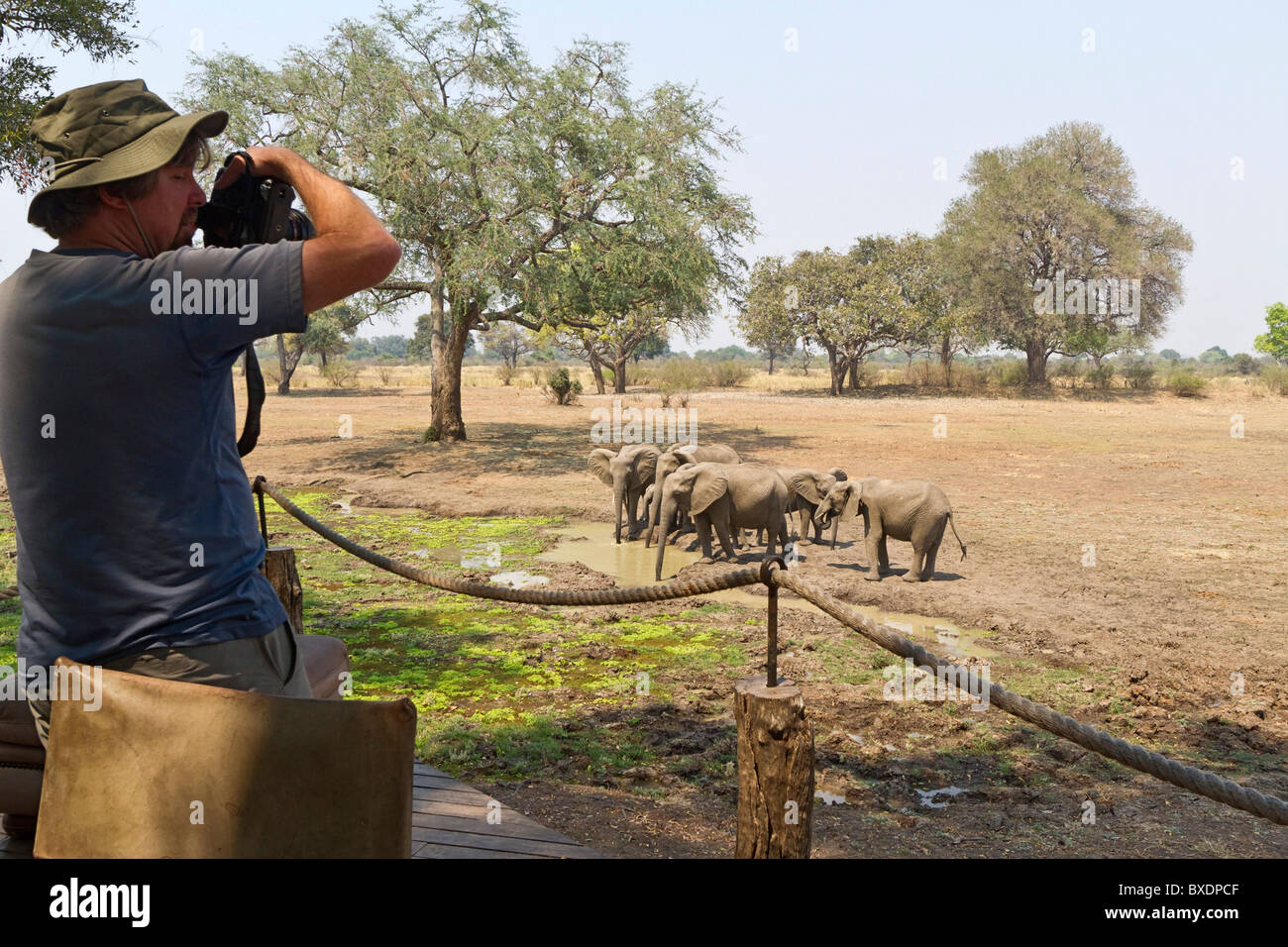 Männliche Besucher fotografiert Elefanten vom Deck bei Robin Pope Safari Lodge, South Luangwa Valley, Sambia, Stockbild